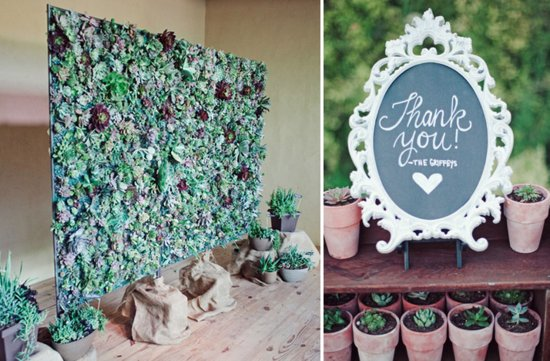 succulent wedding backdrop and potted favors