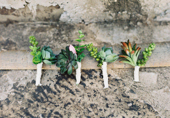 sweet succulents for green weddings 1