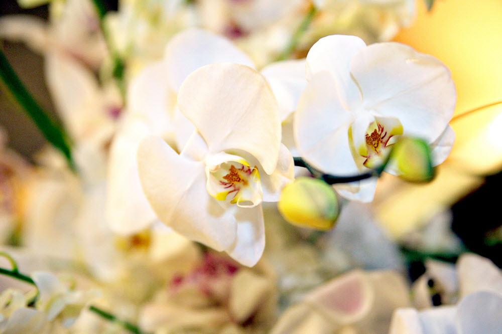 Orchid-wedding-flowers-ivory-wedding-reception-style-elegant-romantic.full