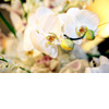 Orchid-wedding-flowers-ivory-wedding-reception-style-elegant-romantic.square