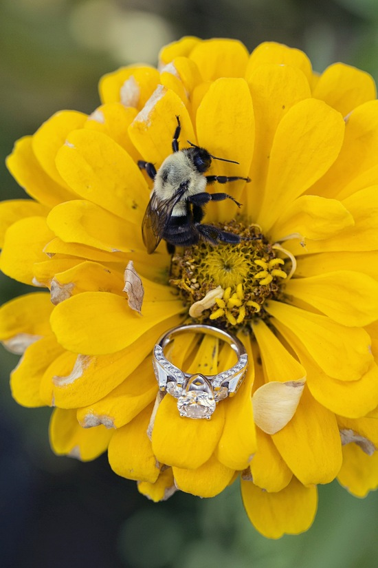 Bee ring shot