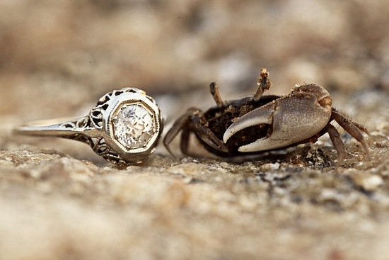 Engagement ring with crab