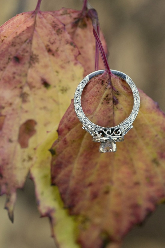 photo of Ring shot on a leaf