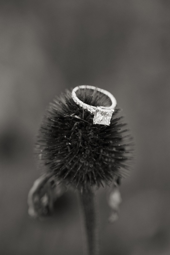 Rings in nature