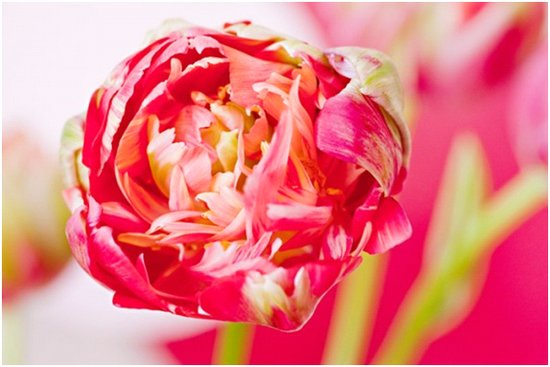 Pink peony tulip wedding flowers for a summer wedding