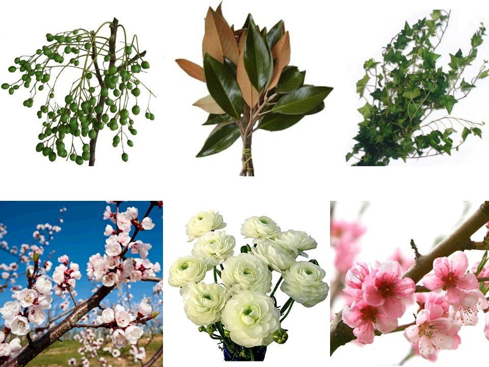 Eco-friendly-wedding-flowers-blooming-branches-wedding-ceremony-reception-green.full