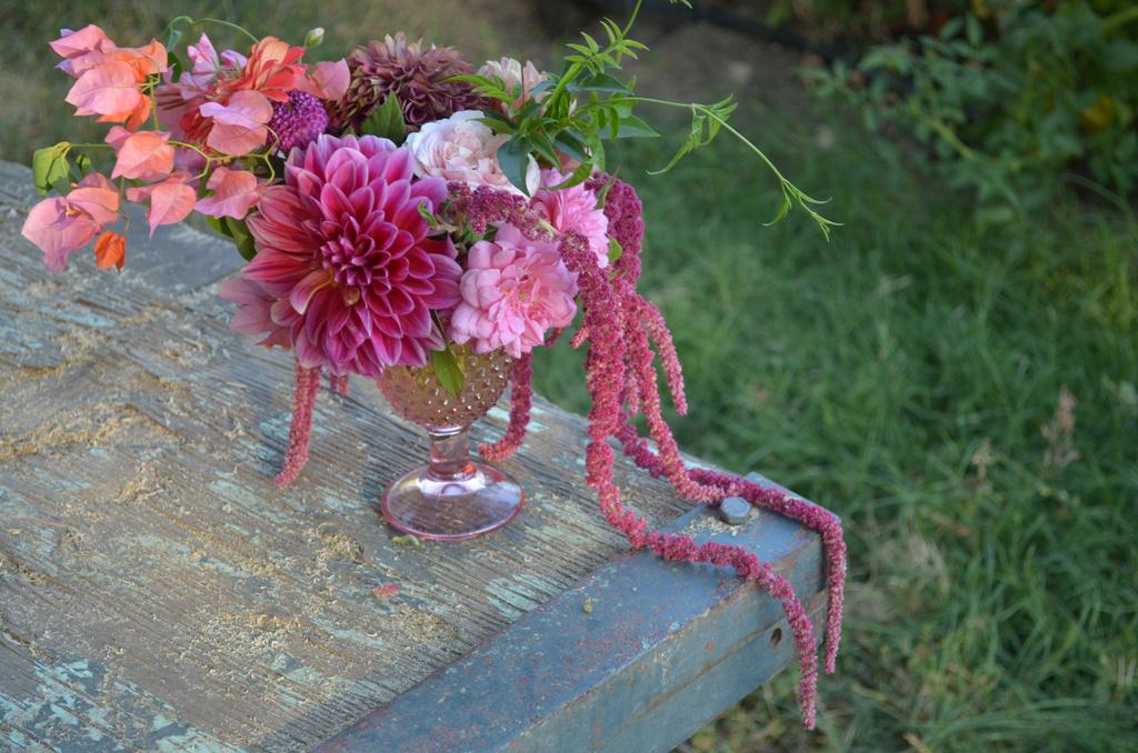 Farm_pink_amaranth.full