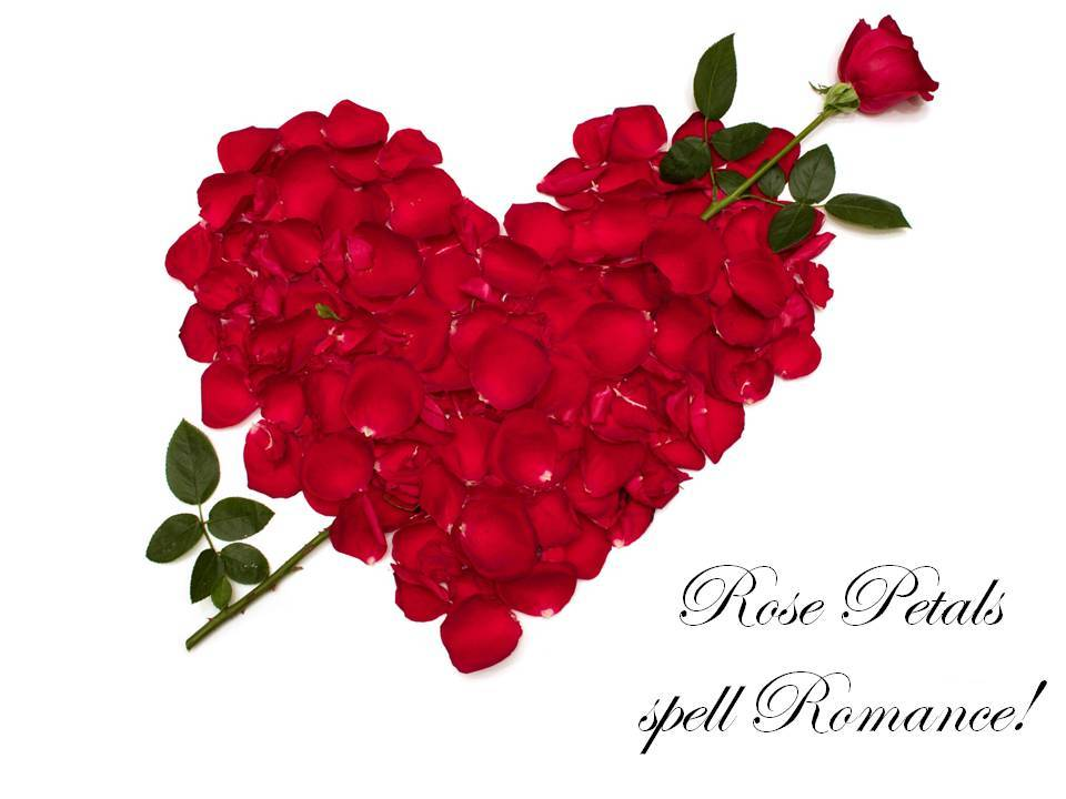Valentines-day-rose-petals-diy-wedding-flowers-idea-red-roses.full