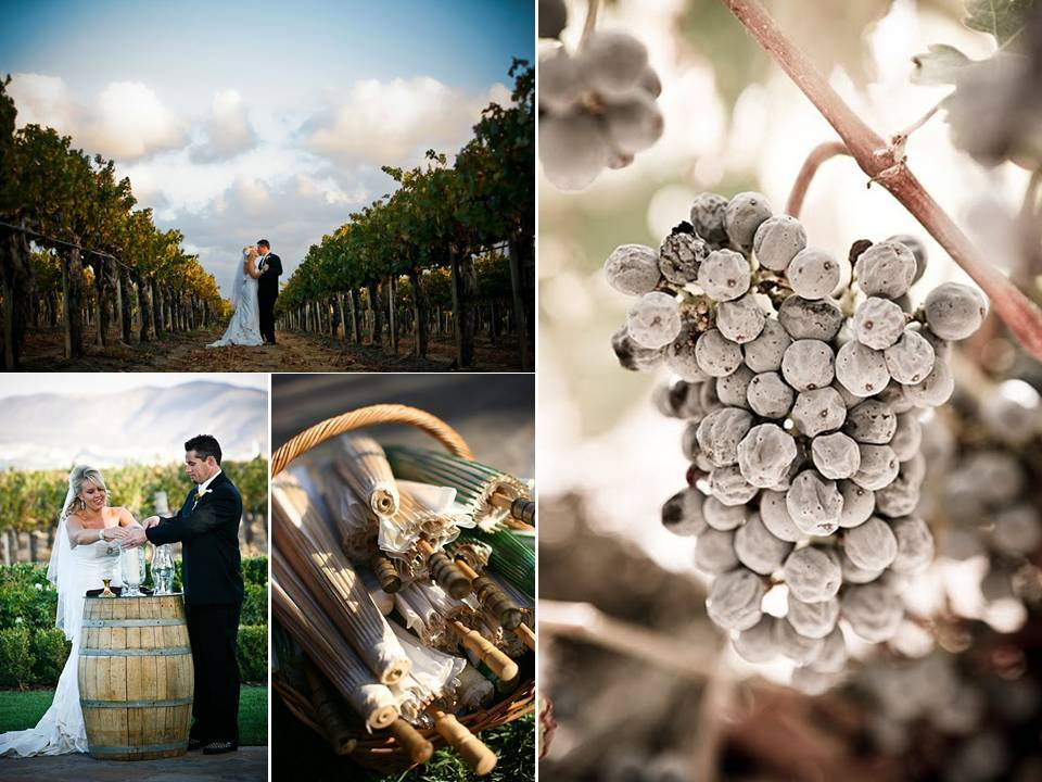 Vineyard-wedding-outdoor-wedding-venue-2011-wedding-trends_0.full