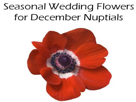 Gorgeous Red Anemone bloom is in-season in December, so a perfect winter wedding flower