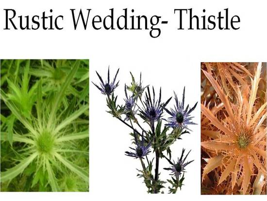 Thistle flowers are perfect for a rustic chic wedding