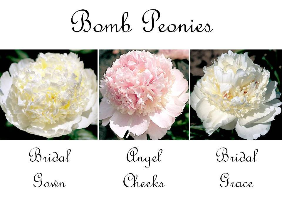 Romantic-wedding-flowers-bomb-peonies-lush-voluminous.full