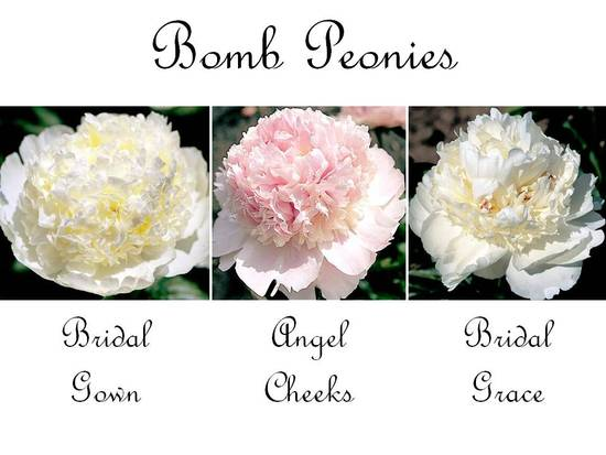 Dramatic and romantic bomb peony wedding flowers