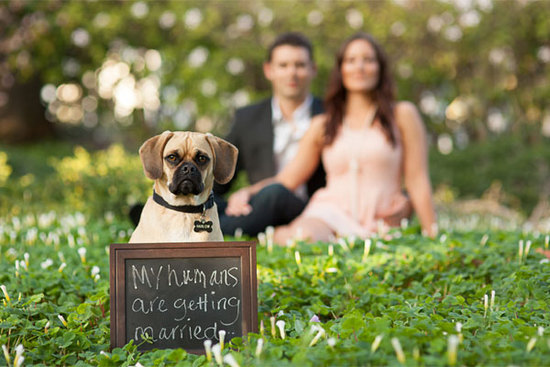 dog-in-engagement-photos