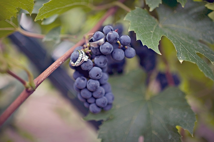 New-hampshire-winery-wedding-vineyard-grapes-photographed-with-diamond-wedding-bands-engagement-rings.full