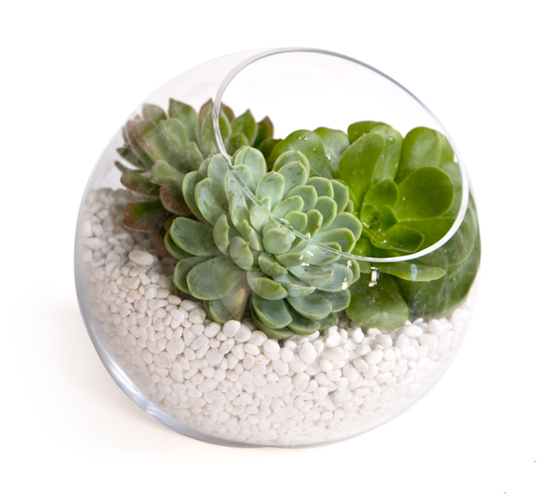 Easy DIY centerpiece idea- rich succulents in clear Zen bowl with white stones