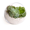 Easy-diy-centerpiece-idea-green-succulents-in-clear-zen-vase.square