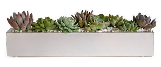 Easy DIY centerpiece idea- velvety succulents arranged in brushed aluminum trough