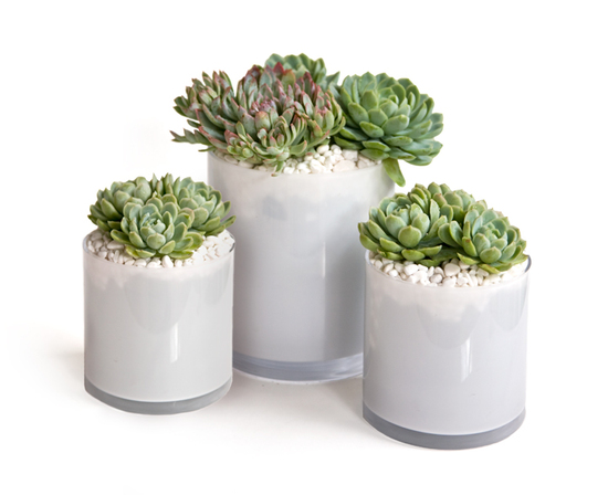 Easy DIY centerpiece idea- Lovely green and purple succulents arranged in white glass vases