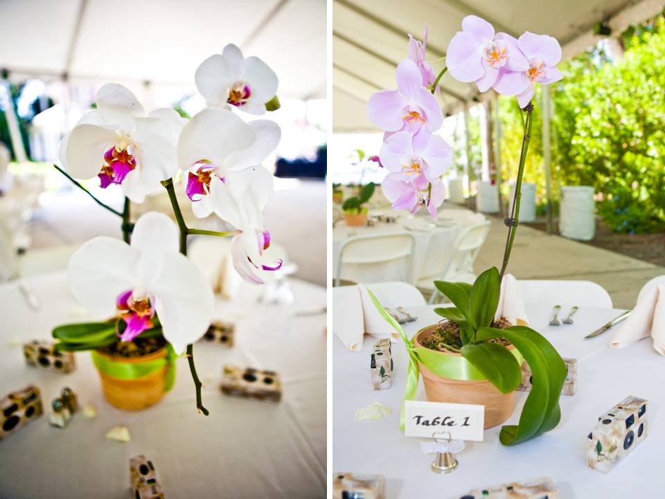 Beautiful white orchids arranged in clay pots for wedding