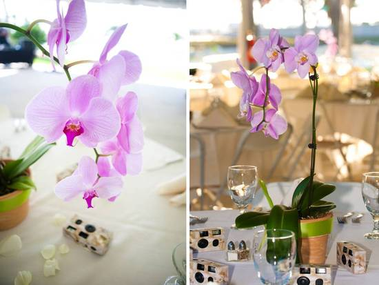 Gorgeous light purple orchids in terra cotta planters for table centerpieces