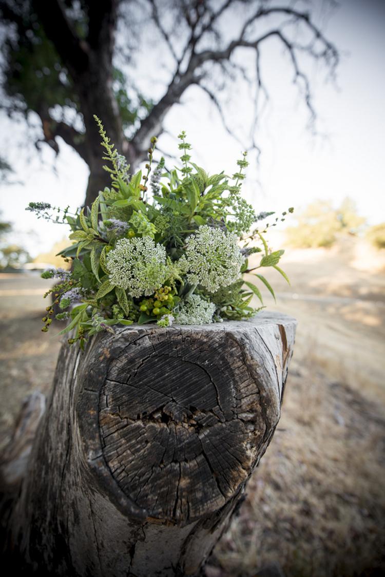Wild_flowers_on_tree_trunk.full