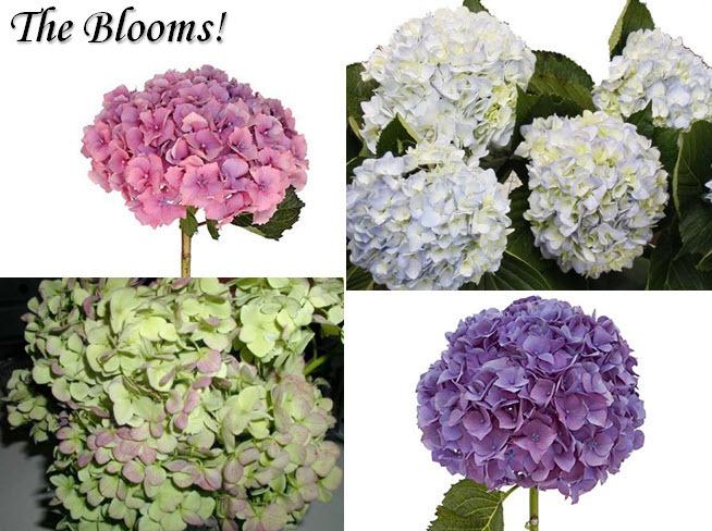 Anna-paquin-stephen-moyer-wedding-details-malibu-california-groom-runs-into-ocean-after-wedding-ceremony-wedding-flowers-hydrangeas.full