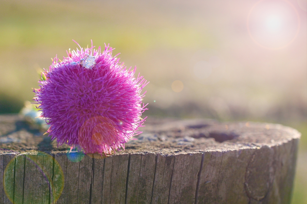 Artistic-use-of-light-hot-pink-flower-dazzling-diamond-engagement-ring-shot.full