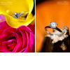 Vibrant-hot-pink-yellow-roses-brilliant-round-diamond-engagement-ring-orange-backdrop-with-diamond-ring-on-wood.square
