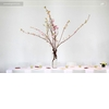 Eco-chic-green-wedding-minimal-wedding-reception-tablescape-white-cherry-blossoms-centerpiece.square