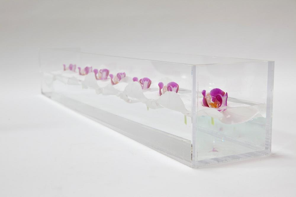 Clear Lucite troughs filled with floating purple Orchids for your wedding reception decor