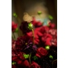 Deep-red-roses-eggplant-purple-flowers-green-leafs-details-wedding-flowers-arrangements-centerpieces.square