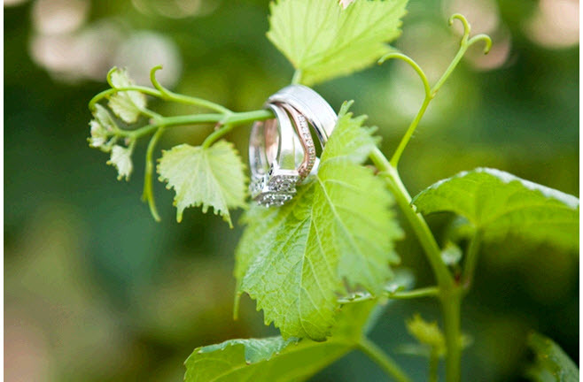 Artistic wedding rings engagement ring shot- rings hang from beautiful leaf