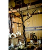 Table_number_tree_branch_centerpiece.square