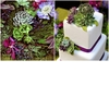 Fondant-succulents-white-square-tiered-wedding-cake-purple-ribbon-gorgeous-fondant-succulents.square