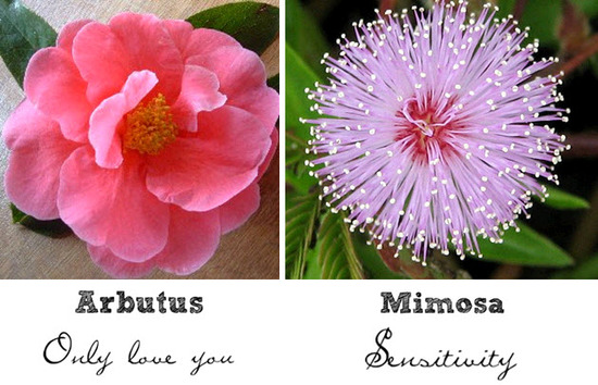 "The pink Arbutus flower represents ""only love you""; Mimosa flowers symbolize sensitivity"