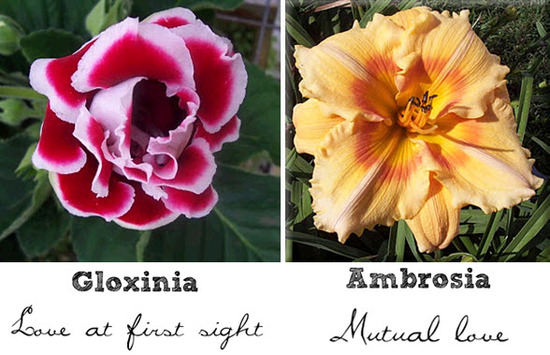 The Gloxinia flower represents love at first sight, the Ambrosia represents mutual love