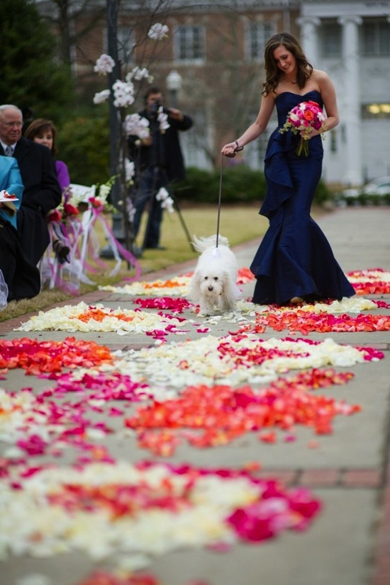 Walking down the Aisle with a Pup
