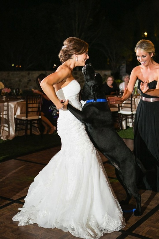 Pup Kissing a Bride