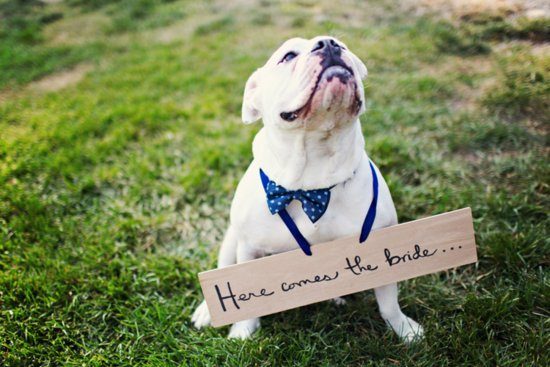 A Dashing Pup for the Bride