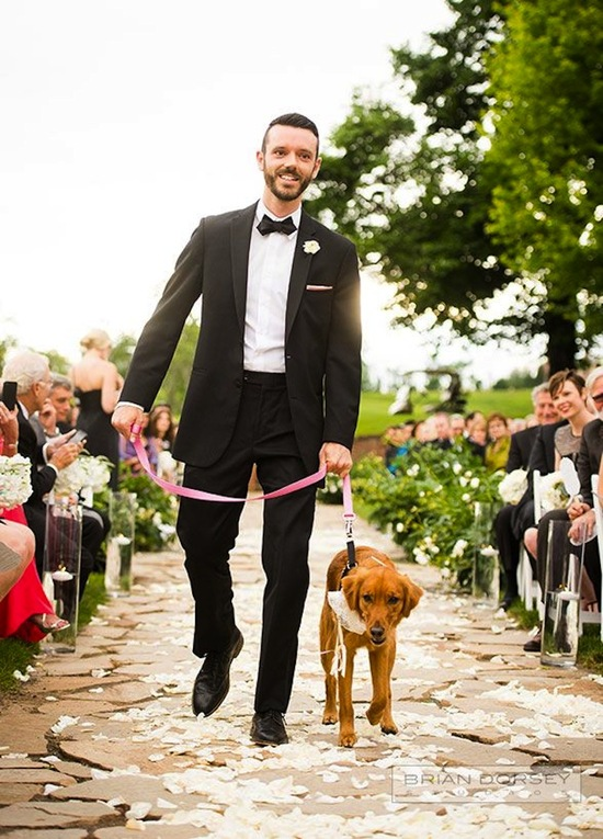 Male brings down the ring bearer pup