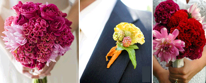 Beautiful bridal bouquets and groom's boutonniere with celosia flowers