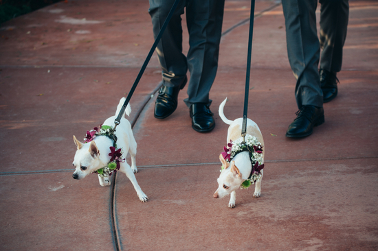 Cute Pups down the Aisle