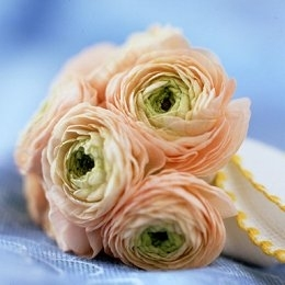 Bridal bouquet made of peach, ivory and freen ranunculus- whimsical and romantic!