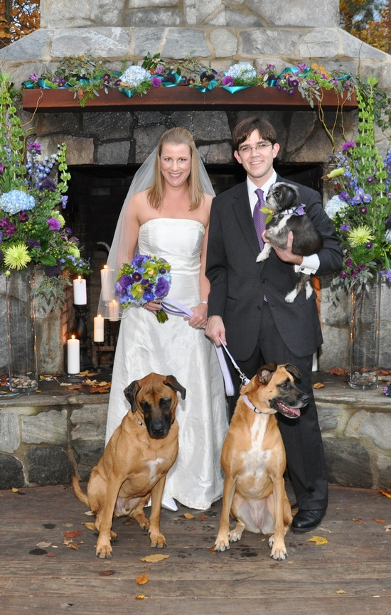 The happy family poses with their dogs on their wedding day.