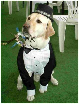 photo of The Man Registry: Tastefully Including Pets In Your Wedding