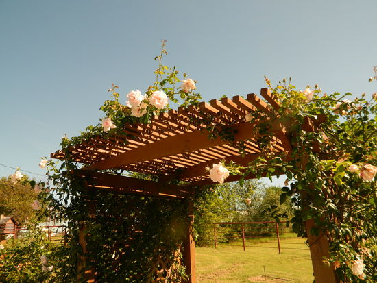 Rose Arbor at Civil War Ranch