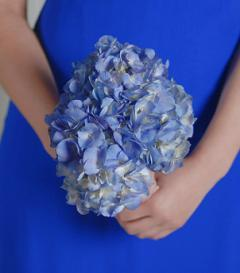 photo of Blue Hydrangea Bridesmaid Bouquet