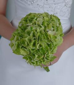 photo of Green Hydrangea Bridal Bouquet