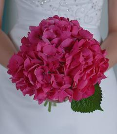 photo of Hot Pink Hydrangea Bridal Bouquet